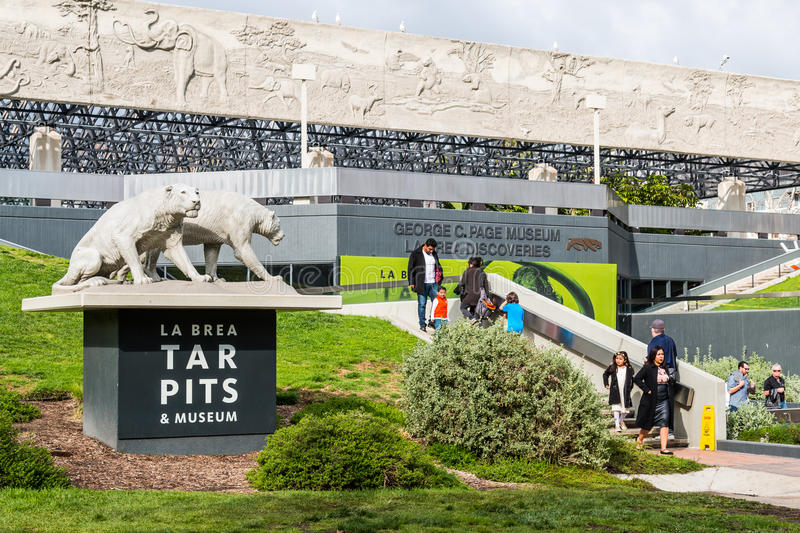 Saber Tooth Tigers Near Entrance of La Brea Tar Pits. LOS ANGELES, CALIFORNIA - FEBRUARY 19, 2017: LOS ANGELES, CALIFORNIA - FEBRUARY 19, 2017: Statue of saber royalty free stock images