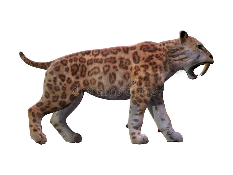 Saber-toothed Cat Profile. The Saber-toothed Tiger lived worldwide in the Eocene to the end of the Pleistocene Periods stock photos