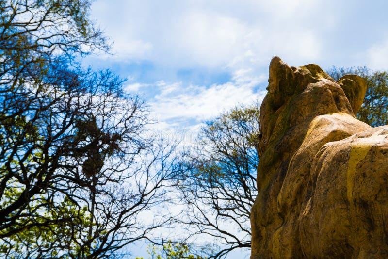Sabertooth tygrysia statua w dobrze fotografia i zadziwiający niebo zdjęcia royalty free