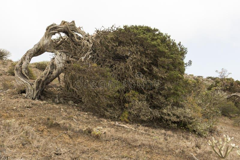 Download Sabina tree stock image. Image of lone, sabina, islands - 93427633