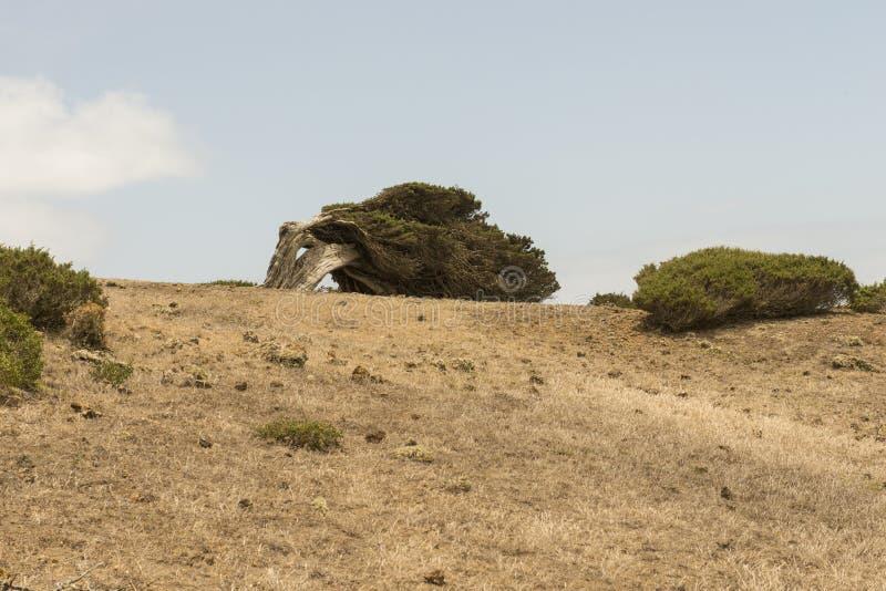 Download Sabina tree stock image. Image of lone, spain, rugged - 93427853