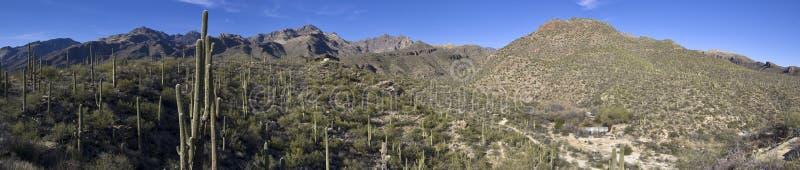 Sabino Canyon stock photos