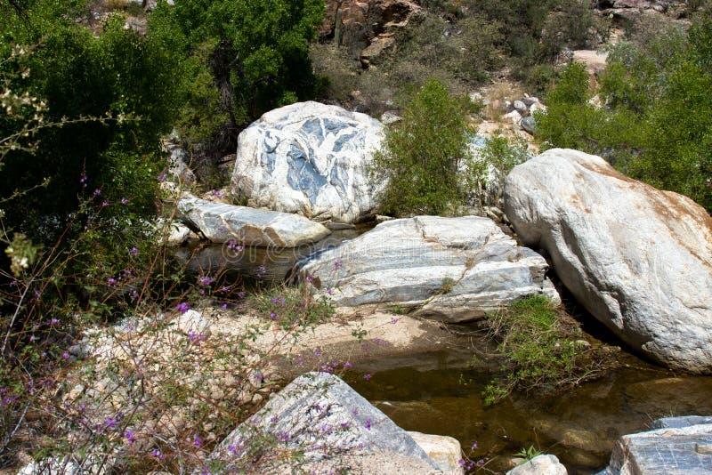 Sabino Canyon fotografia stock libera da diritti