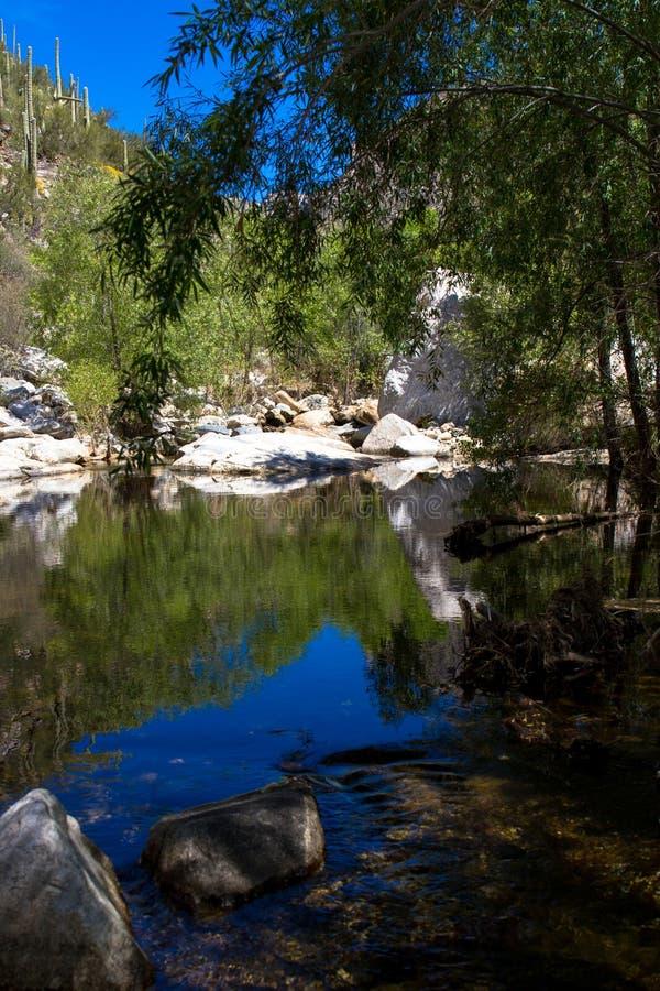 Sabino Canyon immagine stock libera da diritti