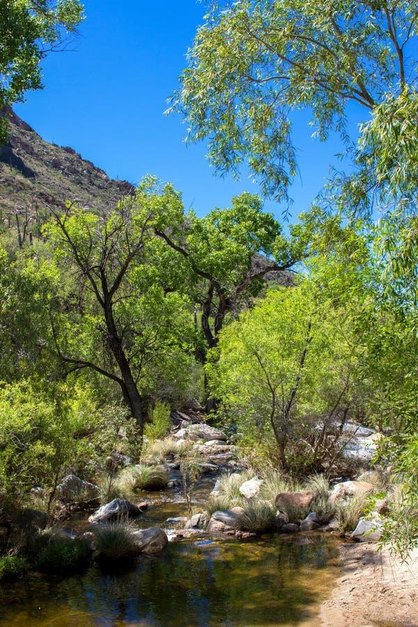 Sabino Canyon fotografia stock