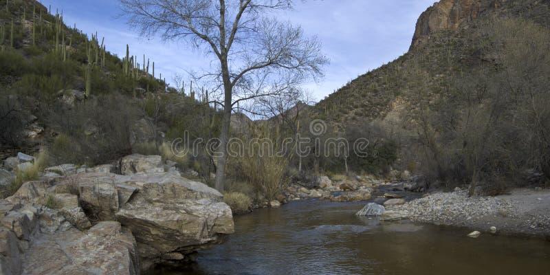 Sabino Canyon Creek (partial panoramic) stock photos