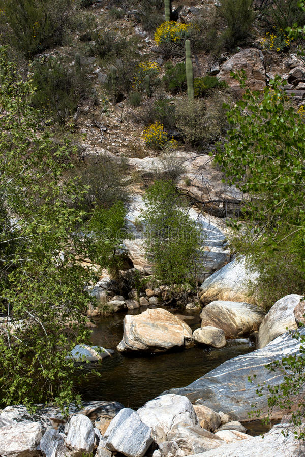 Sabino Canyon stock photography
