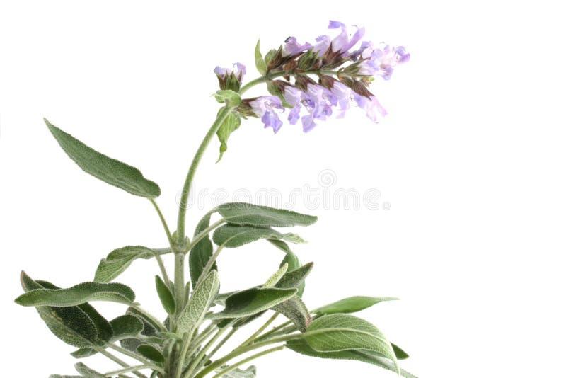 Sabio con las flores aisladas fotografía de archivo