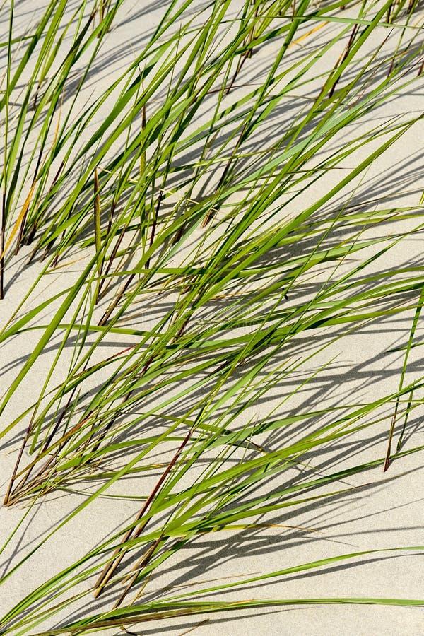 Sable de bord de la mer avec l'herbe verte images stock