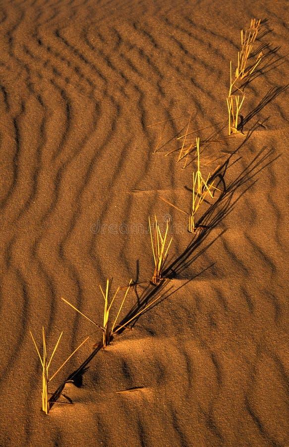 Sable et herbe photos libres de droits