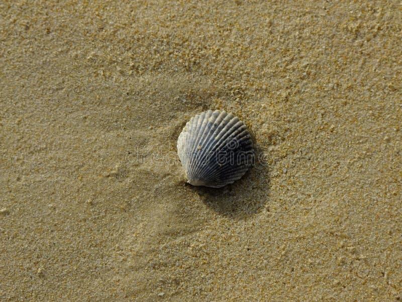 sable et mollusques et crustacés images stock