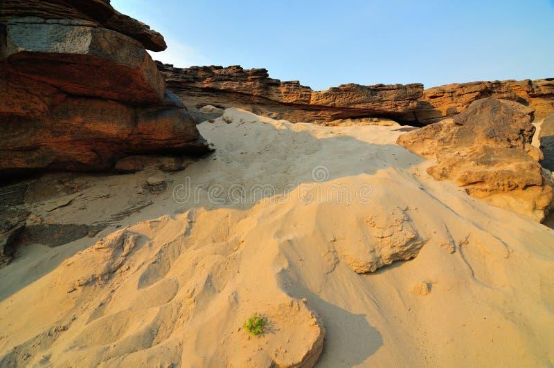 Sable et usines de désert photo libre de droits
