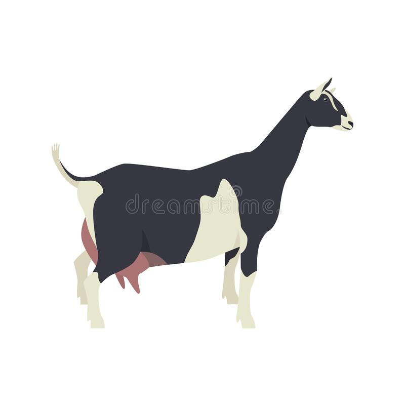 Free Sable Goat Breeds Of Domestic Farm Animals Flat Vector Illustration Isolated Object On White Background Royalty Free Stock Photo - 178195505