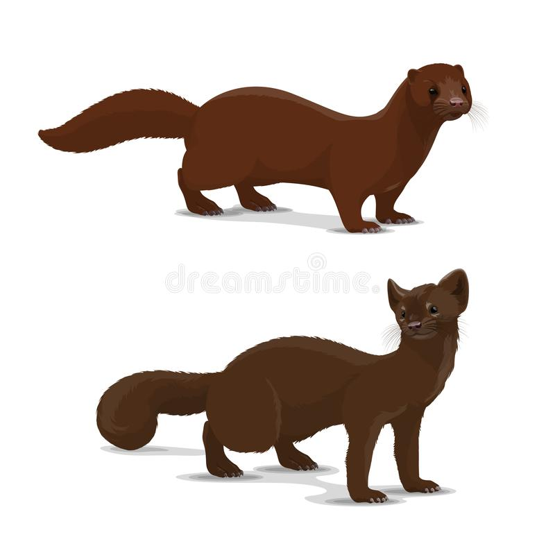 Sable and mink cartoon vector animal vector illustration