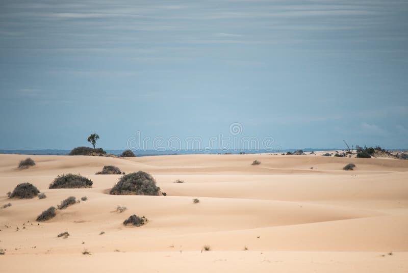 Sables de désert photo stock