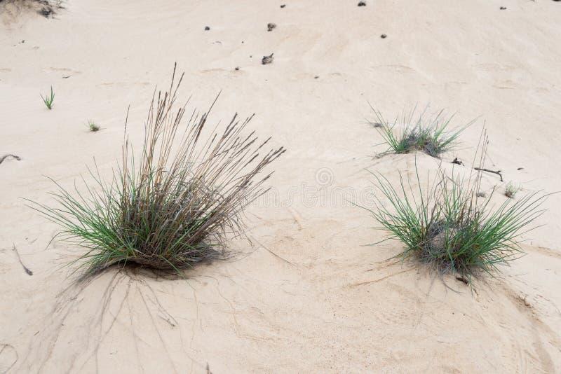 Sables du désert photo libre de droits