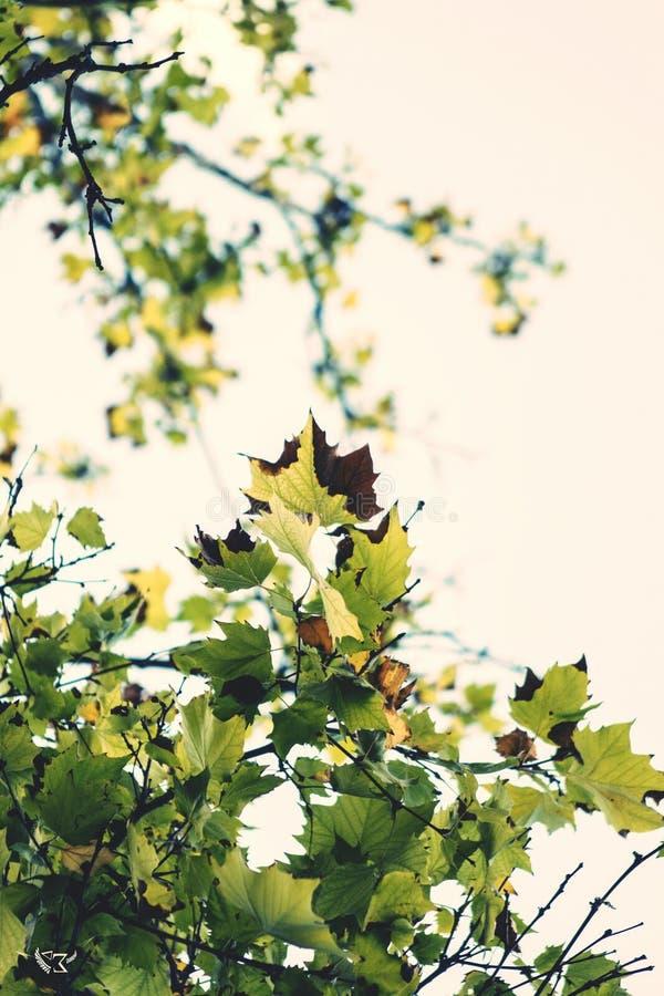 Sabor del otoño imagen de archivo libre de regalías