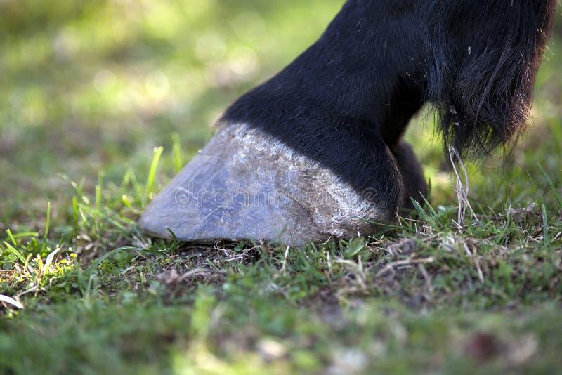 Sabot aux pieds nus de cheval image stock
