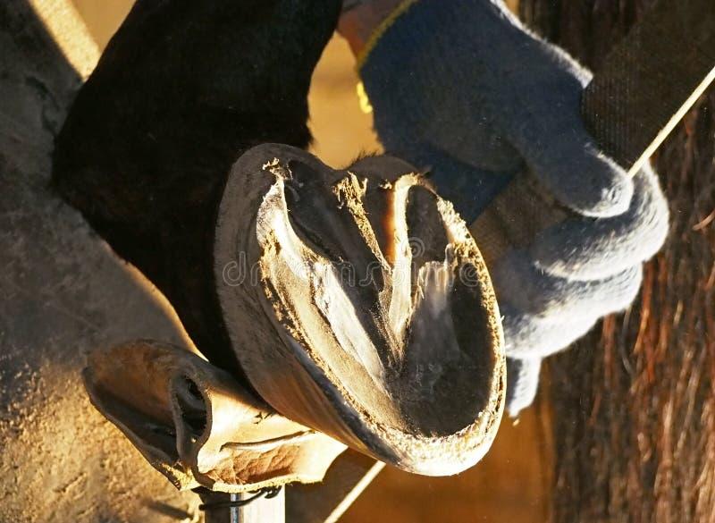 Sabot de cheval de nettoyage de maréchal-ferrant photo libre de droits