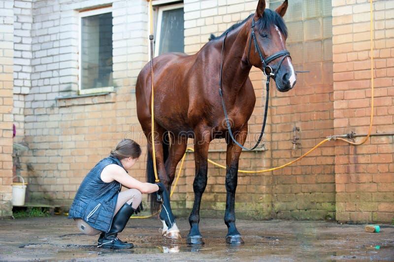 Sabot de lavage de cheval de jeune dame par le courant d'eau d'un tuyau images stock