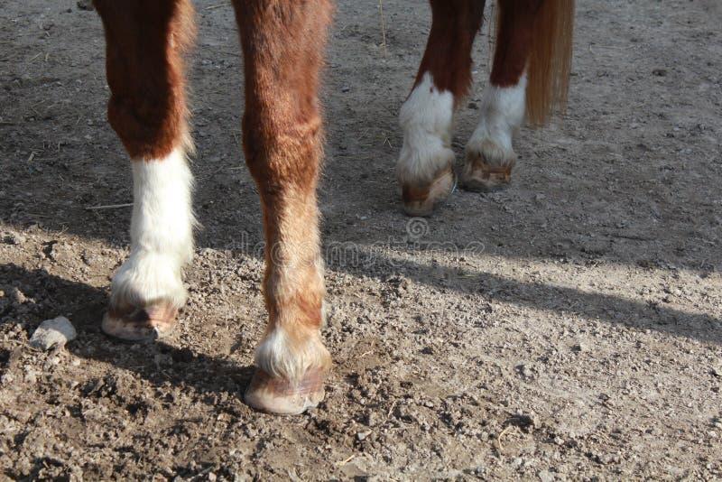 Sabots d'un cheval image libre de droits
