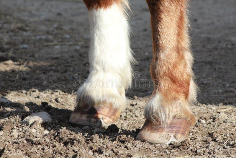Sabots d'un cheval photo stock