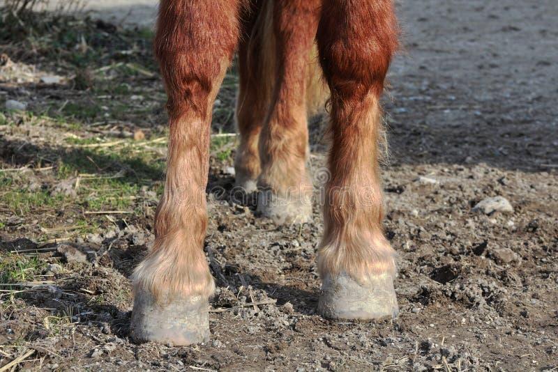 Sabots d'un cheval photo libre de droits