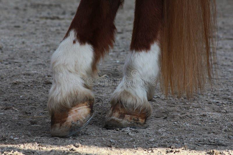 Sabots d'un cheval image stock