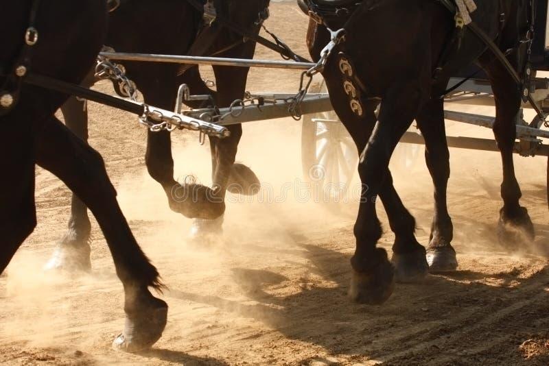 Sabots de cheval photographie stock