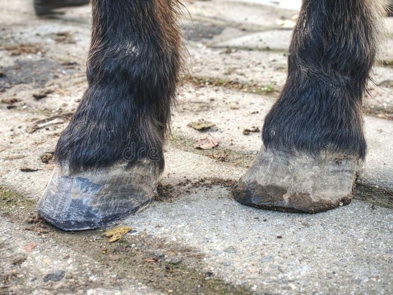 Sabots de cheval apr?s soin de mar?chal-ferrant Smith finnished photos stock