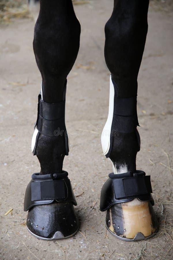 Sabots de cheval d'haut étroit de jambes avant image libre de droits