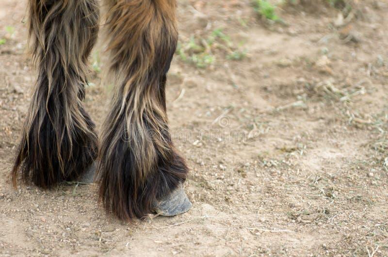 sabots et jambes de chevaux photo stock