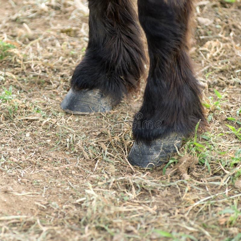 sabots et jambes de chevaux image stock