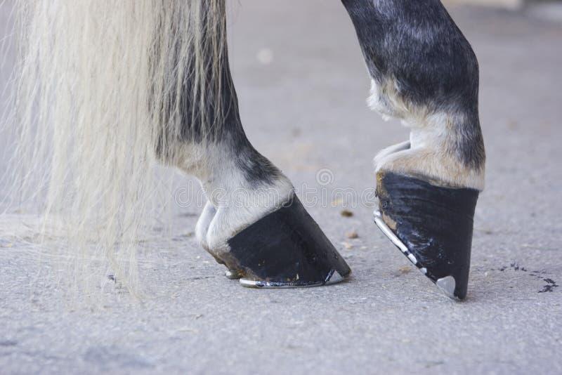 Sabots noirs de cheval photos libres de droits