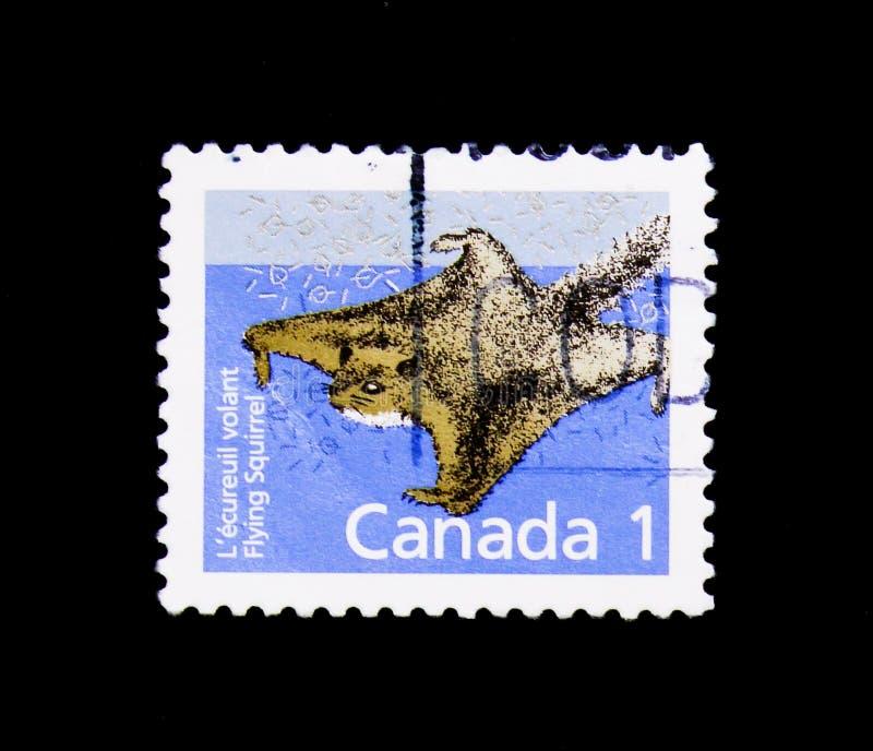 Sabrinus del Glaucomys de la ardilla de vuelo septentrional, Definitives 1988-93: Serie canadiense de los mamíferos, circa 1991 fotos de archivo libres de regalías
