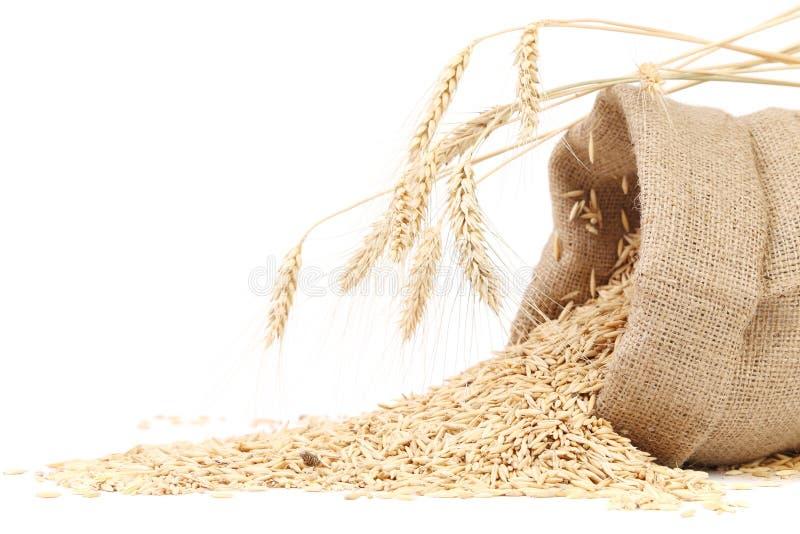 Sac avec des grains et oreille de blé. photo libre de droits