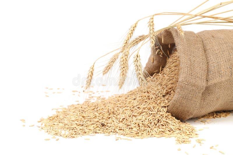Sac avec des grains et oreille de blé. photo stock