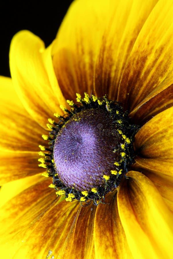 Sacado el polvo en polen fotos de archivo libres de regalías
