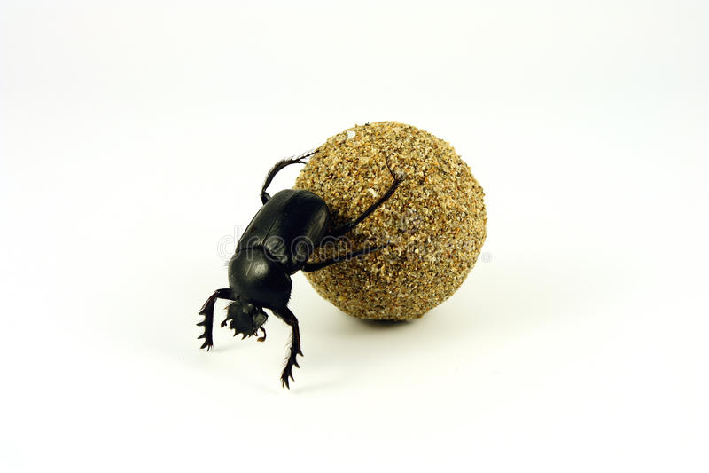 sacer scarabaeus στοκ φωτογραφία με δικαίωμα ελεύθερης χρήσης