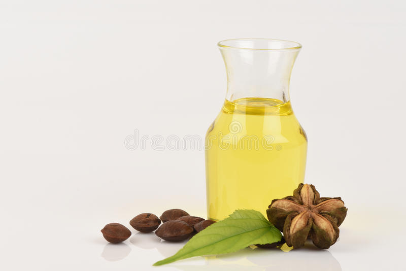 Sacha inchi, Sacha inchi, Sacha mani, Inca peanut oil from seeds and Sacha. Inchi, an element with a high protein (27%) and oil (35-60%), and oil is also rich royalty free stock photo