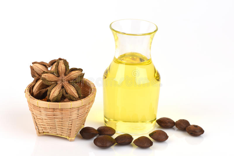 Sacha inchi, Sacha inchi, Sacha mani, Inca peanut oil from seeds and Sacha. Inchi, an element with a high protein (27%) and oil (35-60%), and oil is also rich royalty free stock images