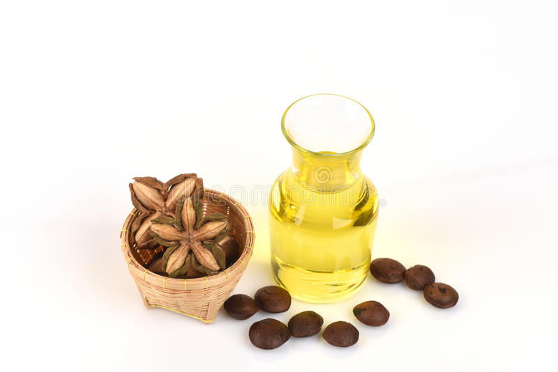 Sacha inchi, Sacha inchi, Sacha mani, Inca peanut oil from seeds and Sacha. Inchi, an element with a high protein (27%) and oil (35-60%), and oil is also rich royalty free stock image