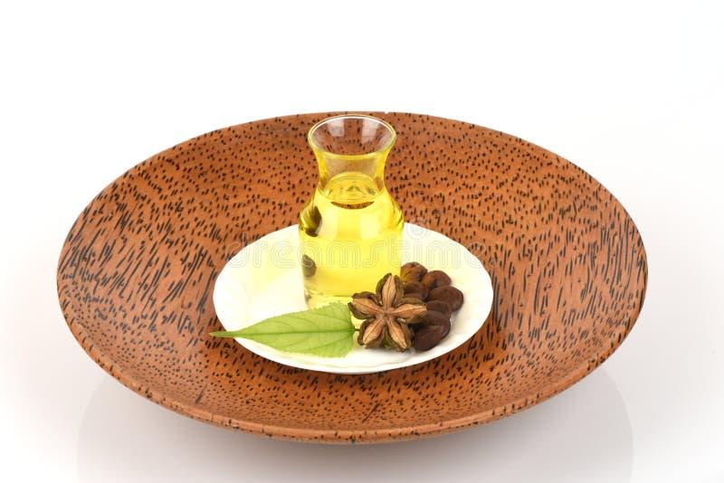 Sachainchi, Sacha-inchi, Sacha-mani, de arachideolie van Inca van zaden en Sacha royalty-vrije stock afbeeldingen