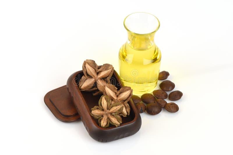 Sachainchi, Sacha-inchi, Sacha-mani, de arachideolie van Inca van zaden en Sacha stock afbeelding