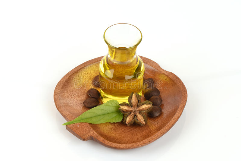 Sachainchi, Sacha-inchi, Sacha-mani, de arachideolie van Inca van zaden en Sacha royalty-vrije stock afbeelding
