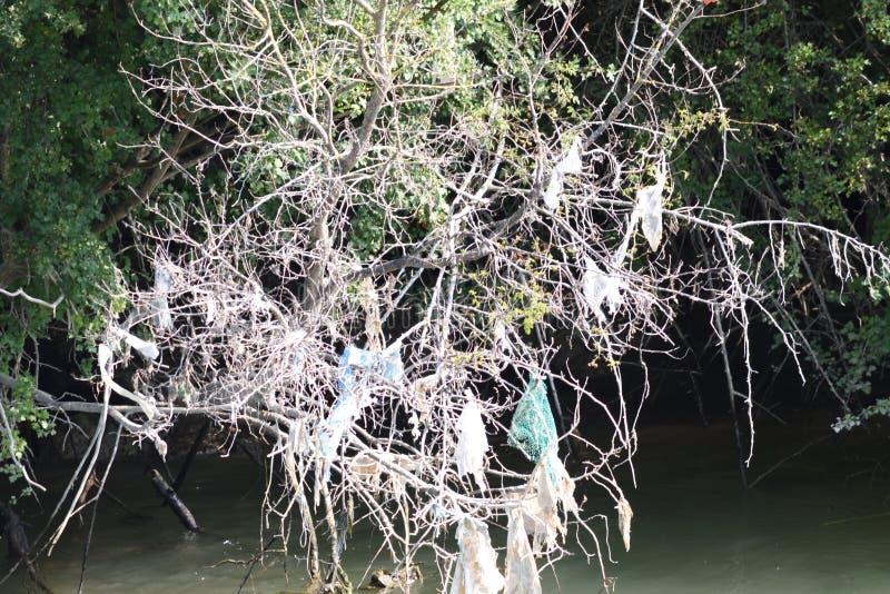 Sachets et déchets en plastique accrochant dans les arbres par le lit de rivière image stock