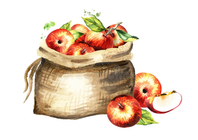 Sack of apples.. Watercolor hand drawn illustration, isolated on white background.  stock illustration