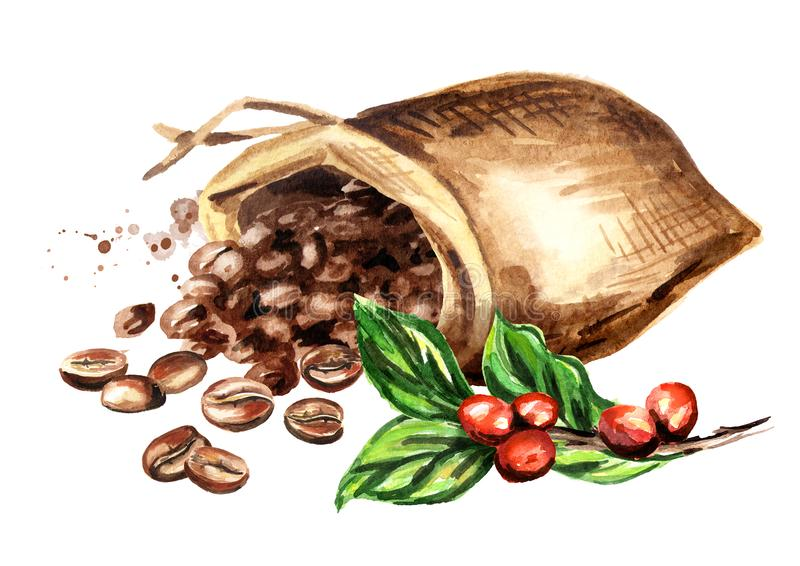 Sack of coffee beans and green coffee branch. Watercolor hand drawn illustration, isolated on white background. stock illustration