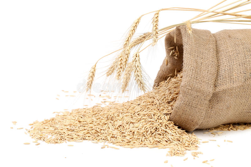 Sack with grains and ear of wheat. Isolated on a white background stock photo