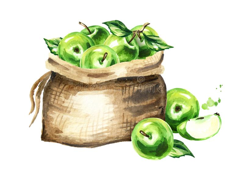 Sack of green apples.. Watercolor hand drawn illustration, isolated on white background vector illustration